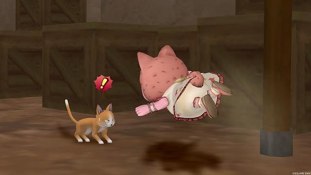 野良猫にダイブするぷくみ